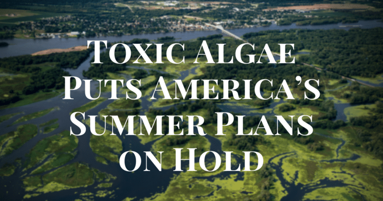 Toxic Algae Puts America's Summer Plans on Hold