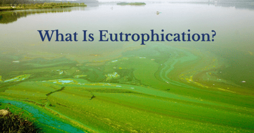 What Is Eutrophication?