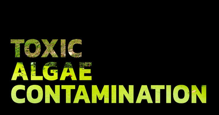The Implications of Toxic Algae Contamination